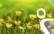 14 de marzo 2019: Concierto de Primavera